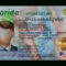 Florida Driver License Template with Florida Id Card Template